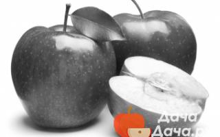 Сорт яблони винное фото и описание сорта