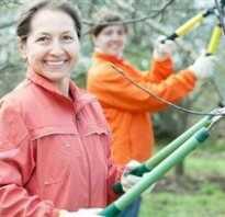 Обрезка молодой яблони весной видео
