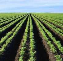Количество гумуса в подзолистых почвах