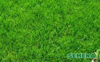 Расход семян травы на 1м2