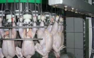 Как разделывают курицу на птицефабрике видео