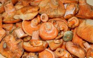 Сколько варить грибы рыжики перед маринованием