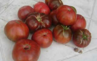 Томат арбуз отзывы фото урожайность