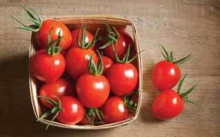 Срок хранения помидор свежих
