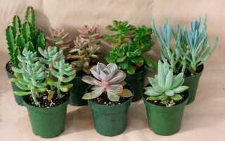Земля для кактусов и суккулентов