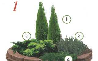 Схема посадки хвойных растений с кустарниками