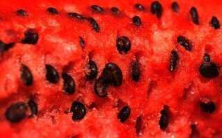 Семена арбуза польза и вред для здоровья