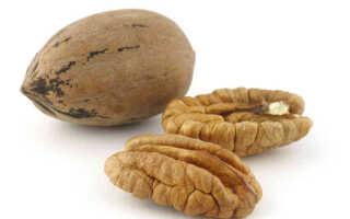 Орехи виды и названия фото пекан