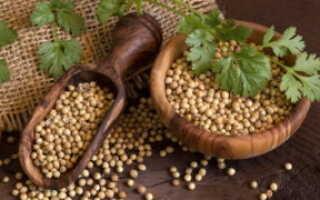 Как использовать семена кориандра