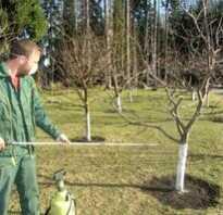 Опрыскивание садовых деревьев осенью