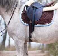 Краткая информация о лошади