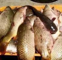 Краснуха у рыбы опасна ли для человека