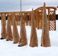 Нужно ли утеплять молодые саженцы на зиму