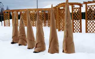 Как утеплить деревья на зиму фото