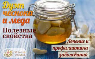 Мед с чесноком от простуды