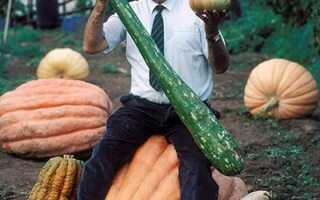 Самые большие овощи и фрукты в мире