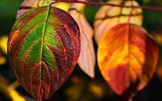 Не увядшие а зеленые листья как пишется