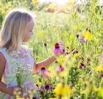 Осенние полевые цветы фото и названия