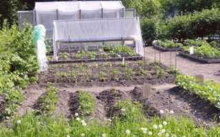 Огород в детском саду на участке