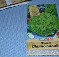 Салат лолло бионда отзывы