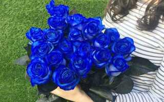 Что означают синие розы подаренные мужчиной