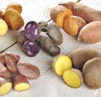Кто завез картофель в европу