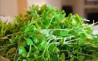 Ореховая трава как называется по другому