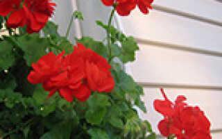 Питомник роз меховских в воронежской области