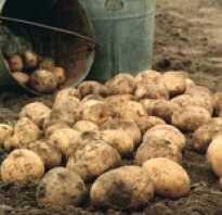 Сколько весит ведро картофеля