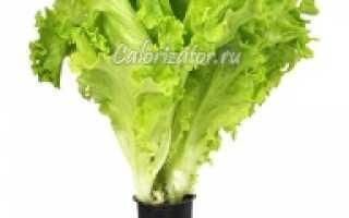 Химический состав салата листового