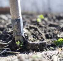 Нужно ли осенью обкапывать кусты и деревья