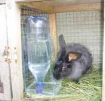 Нужно ли кроликам давать воду