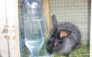 Сколько пьют кролики воды в день