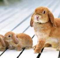 Через сколько дней кролики открывают глаза