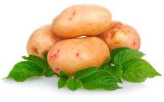 Картофель описание для детей