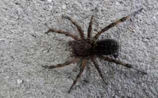 Отличие клещей от пауков