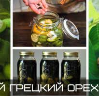 Молодой грецкий орех полезные свойства