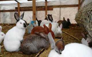 Что делать чтобы кролики не болели