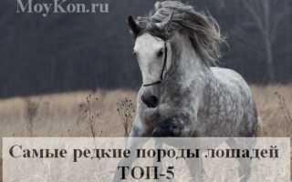 Редкие породы лошадей фото с названиями