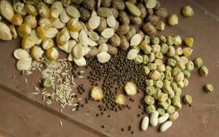 Замачивание семян в водке