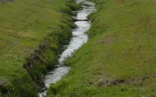К чему приводит осушение болот