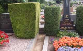 Какие деревья садят на кладбище