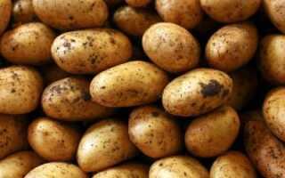 Компресс из тертой картошки