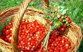 Фото грибы и ягоды в лесу