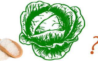Сколько соли и сахара солить капусту