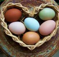 Курица несет зеленые яйца порода