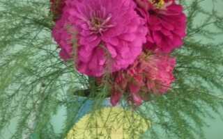 Название цветочных композиций для выставки