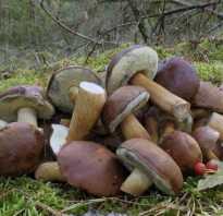 Съедобные грибы донецкой области