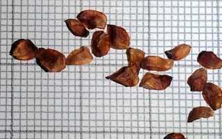 Как вырастить кипарис из семечки