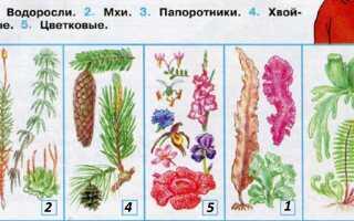 Растения которые определили в классе
